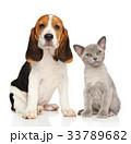 一緒 わんこ 犬の写真 33789682