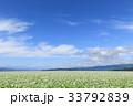 蕎麦 蕎麦畑 長野の写真 33792839