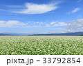 蕎麦 蕎麦畑 長野の写真 33792854