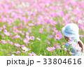コスモス コスモス畑 花の写真 33804616