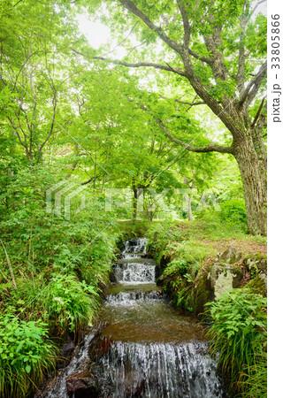 森林公園の小川 33805866