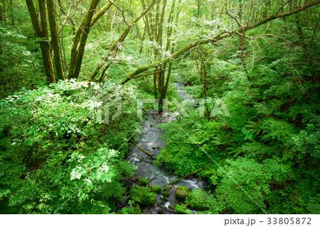 森の小川 33805872