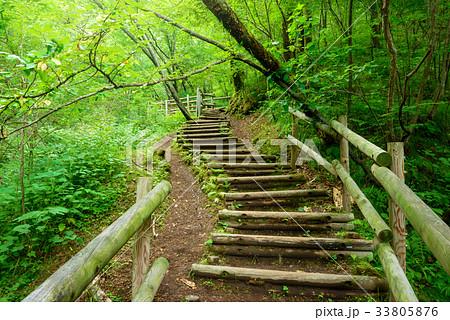 森の中のハイキングトレイル 33805876