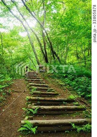 森の中のハイキングトレイル 33805878