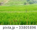 棚田の風景 33805896