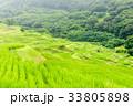 棚田の風景 33805898