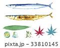 さんま 秋刀魚 ウォーターカラーのイラスト 33810145