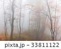 秋 木 紅葉の写真 33811122