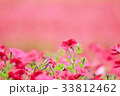 花畑 33812462