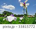 北山公園の花菖蒲 33815772