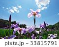 北山公園の花菖蒲 33815791