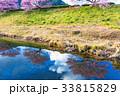 みなみの桜まつり、南伊豆町、河津桜、早春のイメージ 33815829
