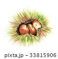 栗 秋の味覚 毬栗のイラスト 33815906