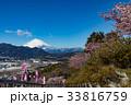 松田山 早春 桜の写真 33816759