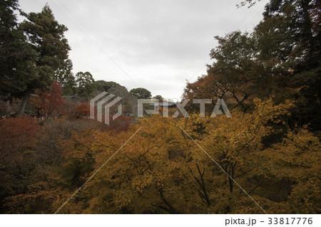東福寺の紅葉 33817776