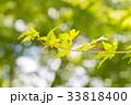 葉 爽やかな 新鮮の写真 33818400