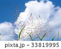 秋 青空 植物の写真 33819995