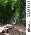 竹林公園 33824213