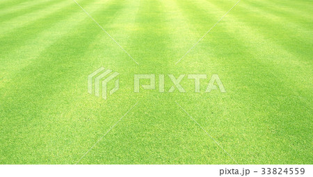Natural background of green grass 33824559