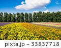 北海道 富良野 満開の写真 33837718