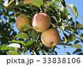リンゴ 林檎  33838106