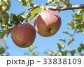 リンゴ 林檎  33838109