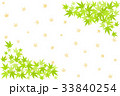 青紅葉 葉 新緑のイラスト 33840254