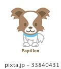 パピヨン 33840431
