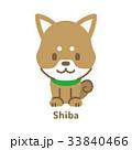 柴犬 犬 ベクターのイラスト 33840466