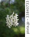 花 植物 屋外の写真 33840733