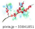 花 春 梅のイラスト 33841851