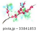 花 春 梅のイラスト 33841853