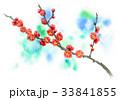 花 春 梅のイラスト 33841855