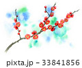 花 春 梅のイラスト 33841856