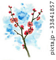 花 春 梅のイラスト 33841857