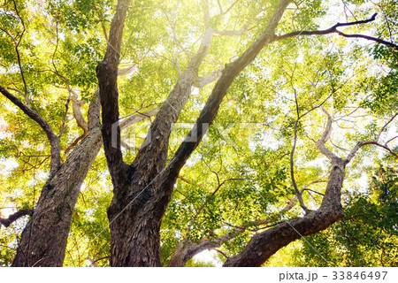 秋の木々 33846497