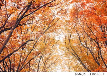 秋色の木々 33846504