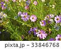 屋外 室外 花の写真 33846768