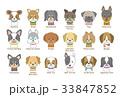 戌年 犬 セットのイラスト 33847852