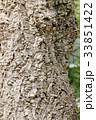 コルクガシの木の背景素材 33851422