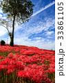 彼岸花 ヒガンバナ 青空の写真 33861105