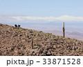 サボテン ロバ 野生の写真 33871528