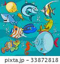 サカナ 魚 魚類のイラスト 33872818