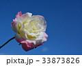 青空の下、一輪のバラの花 33873826
