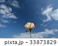青空の下、一輪のバラの花 33873829