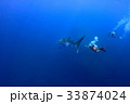 Whale shark is a big fish in the sea. 33874024