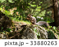 リス りす 栗鼠の写真 33880263