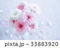 ヤグルマギクの花 33883920