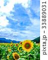 福井 夏 向日葵の写真 33889031