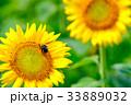 夏の日 33889032